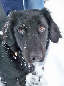 The Dog ~ Dexter...he LOVES the snow!